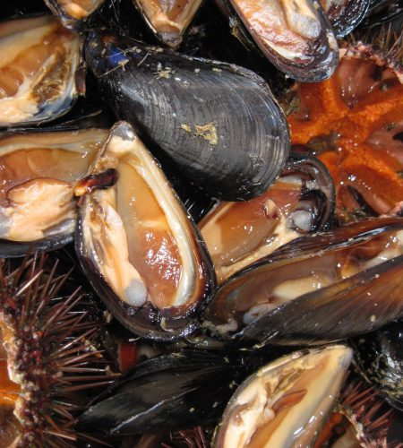 mussels-1177790_1280